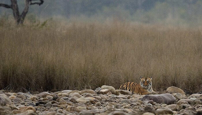 Tiger view at Jims Corbett